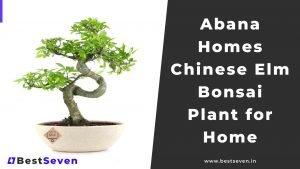 Abana Homes Chinese Elm Bonsai Plant for Home