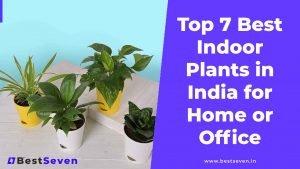 Top 7 Best Indoor Plants in India [Buying Guide]